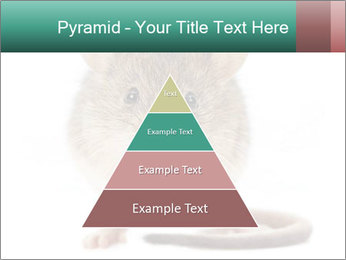 House mouse PowerPoint Template - Slide 30