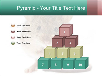House mouse PowerPoint Template - Slide 31