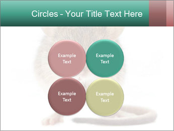 House mouse PowerPoint Template - Slide 38