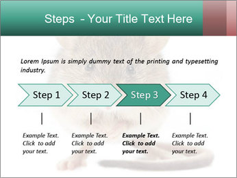 House mouse PowerPoint Templates - Slide 4