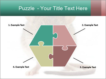 House mouse PowerPoint Templates - Slide 40