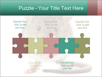 House mouse PowerPoint Template - Slide 41