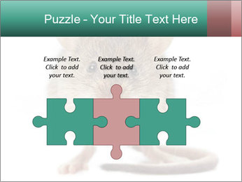 House mouse PowerPoint Templates - Slide 42