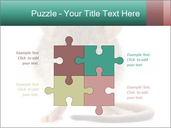 House mouse PowerPoint Templates - Slide 43