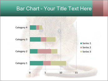 House mouse PowerPoint Templates - Slide 52