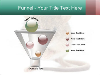 House mouse PowerPoint Templates - Slide 63
