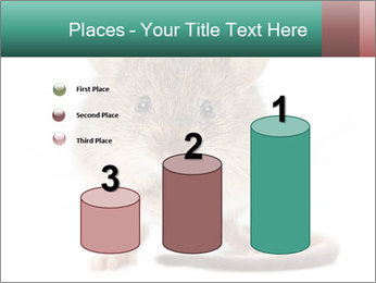 House mouse PowerPoint Templates - Slide 65