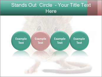 House mouse PowerPoint Template - Slide 76