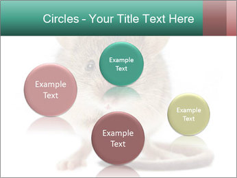 House mouse PowerPoint Template - Slide 77