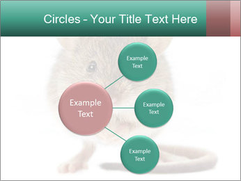 House mouse PowerPoint Template - Slide 79
