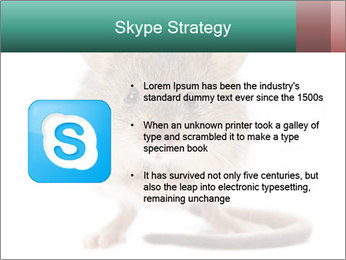 House mouse PowerPoint Template - Slide 8