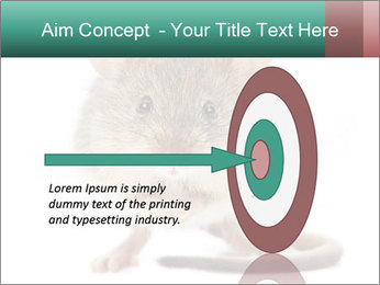 House mouse PowerPoint Template - Slide 83