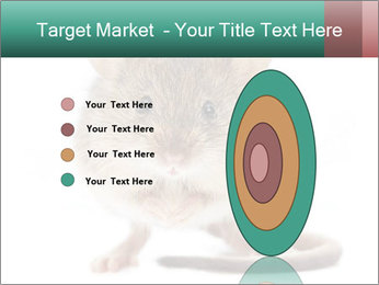 House mouse PowerPoint Templates - Slide 84