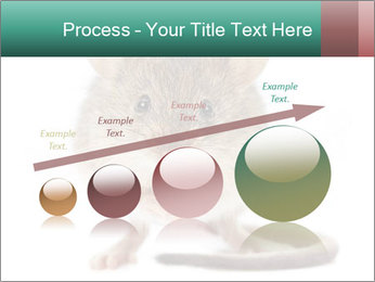 House mouse PowerPoint Template - Slide 87