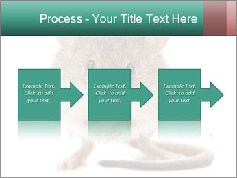 House mouse PowerPoint Template - Slide 88