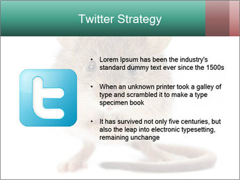 House mouse PowerPoint Template - Slide 9