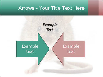 House mouse PowerPoint Templates - Slide 90