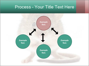 House mouse PowerPoint Template - Slide 91