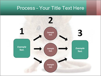 House mouse PowerPoint Template - Slide 92
