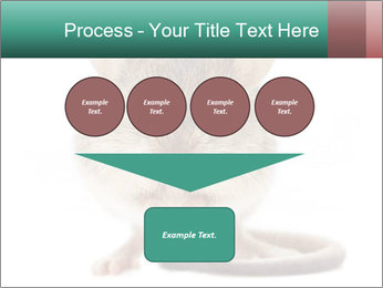 House mouse PowerPoint Templates - Slide 93