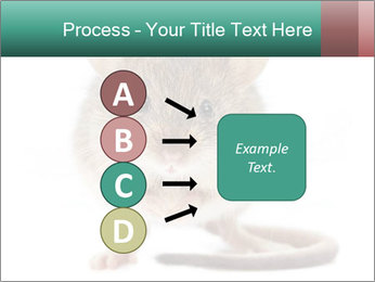 House mouse PowerPoint Templates - Slide 94