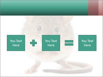 House mouse PowerPoint Template - Slide 95