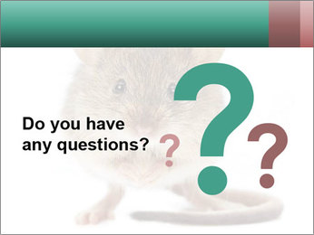 House mouse PowerPoint Template - Slide 96