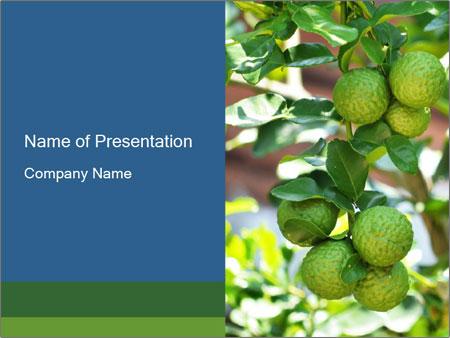 Bergamot on Tree PowerPoint Templates
