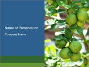 Bergamot on Tree PowerPoint Templates