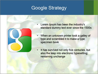 Bergamot on Tree PowerPoint Template - Slide 10