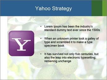 Bergamot on Tree PowerPoint Template - Slide 11