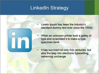 Bergamot on Tree PowerPoint Templates - Slide 12