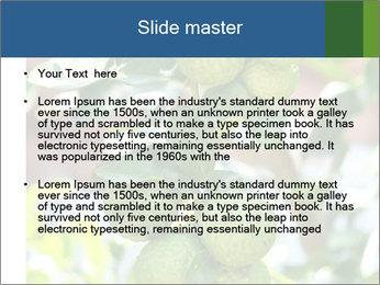 Bergamot on Tree PowerPoint Templates - Slide 2