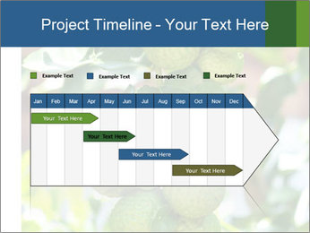 Bergamot on Tree PowerPoint Template - Slide 25