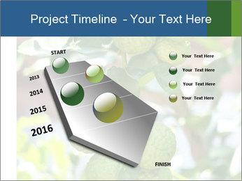 Bergamot on Tree PowerPoint Template - Slide 26