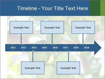 Bergamot on Tree PowerPoint Template - Slide 28