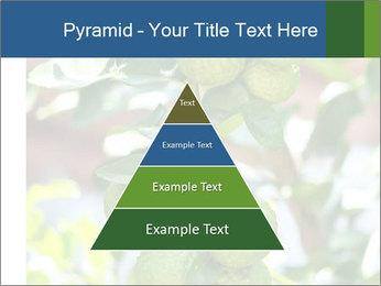 Bergamot on Tree PowerPoint Template - Slide 30