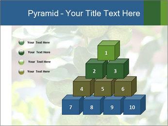 Bergamot on Tree PowerPoint Template - Slide 31