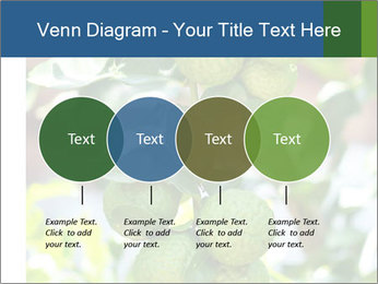 Bergamot on Tree PowerPoint Template - Slide 32