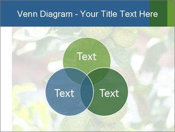 Bergamot on Tree PowerPoint Template - Slide 33