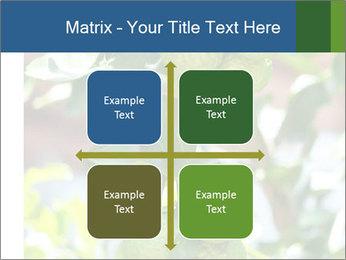 Bergamot on Tree PowerPoint Template - Slide 37