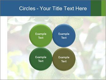 Bergamot on Tree PowerPoint Template - Slide 38