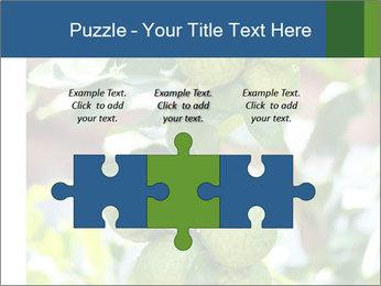 Bergamot on Tree PowerPoint Template - Slide 42