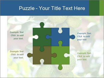 Bergamot on Tree PowerPoint Template - Slide 43