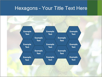 Bergamot on Tree PowerPoint Templates - Slide 44