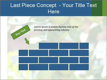 Bergamot on Tree PowerPoint Template - Slide 46