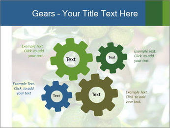Bergamot on Tree PowerPoint Template - Slide 47