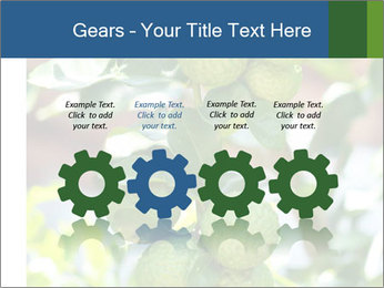 Bergamot on Tree PowerPoint Template - Slide 48