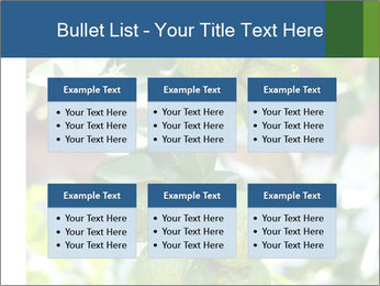 Bergamot on Tree PowerPoint Templates - Slide 56