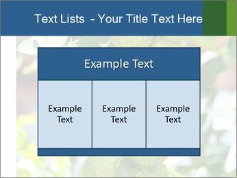 Bergamot on Tree PowerPoint Template - Slide 59